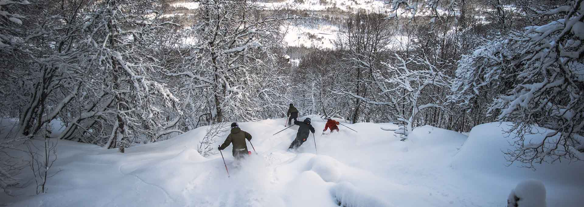 off-piste skiing in birch forest